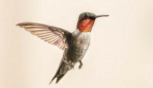 Google Hummingbird, el algoritmo de SEO