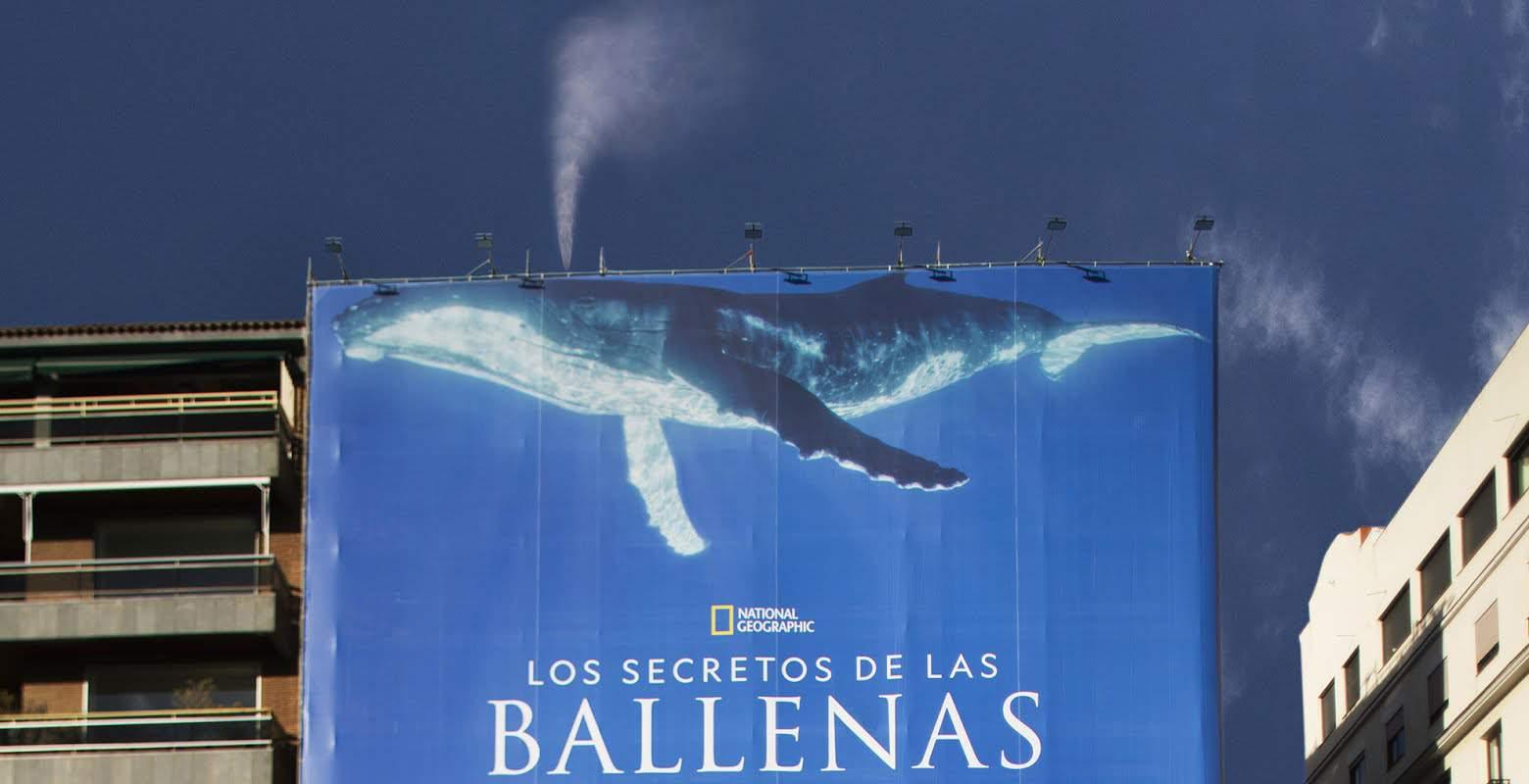 Los secretos de las ballenas, de Disney Plas
